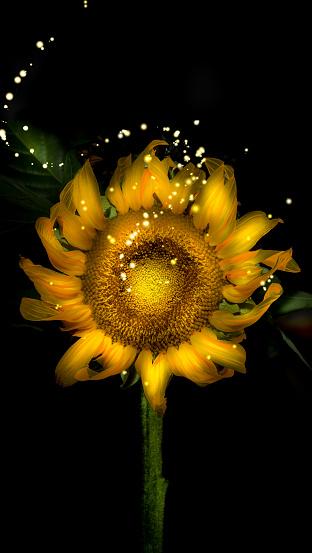ひまわり「Sunflower with sparkles」:スマホ壁紙(10)