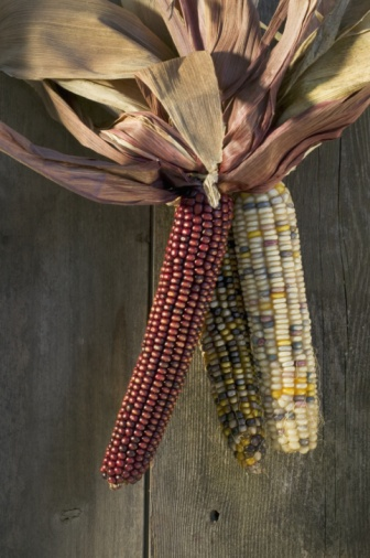 Indian Corn「Colourful corn hanging」:スマホ壁紙(18)
