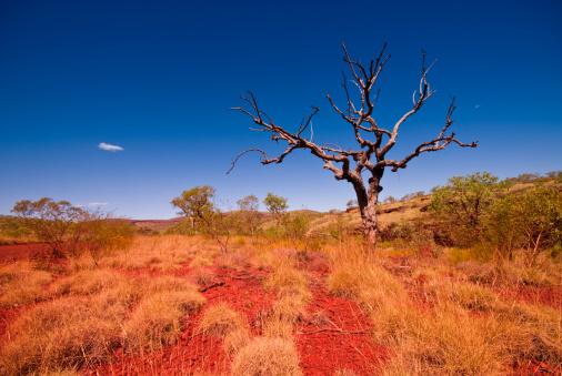 Arid Climate「Outback Western Australia - Tree in Karijini National Park」:スマホ壁紙(16)