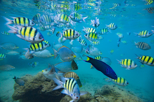 Hikkaduwa「Flock of tropical fish.」:スマホ壁紙(17)