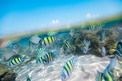 Hikkaduwa「Flock of tropical fish.」:スマホ壁紙(13)
