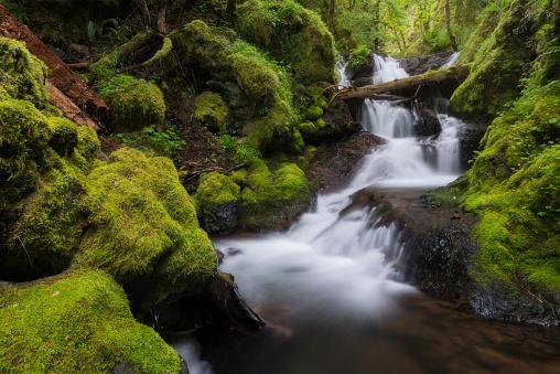 Columbia Gorge National Scenic Area「USA, Oregon, Columbia Gorge National Scenic Area, Gorton Creek Falls, Waterfalls in green forest」:スマホ壁紙(10)