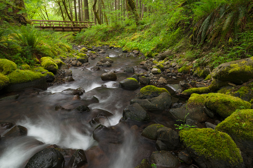 Columbia Gorge National Scenic Area「USA, Oregon, Columbia Gorge National Scenic Area, Gorton Creek Falls, Waterfalls in green forest with footbridge in background」:スマホ壁紙(15)