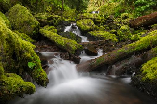 Columbia Gorge National Scenic Area「USA, Oregon, Columbia Gorge National Scenic Area, Gorton Creek Falls, Waterfalls in green forest」:スマホ壁紙(6)