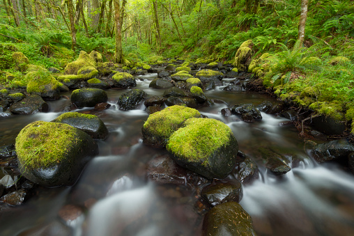 Columbia Gorge National Scenic Area「USA, Oregon, Columbia Gorge National Scenic Area, Gorton Creek Falls, River flowing through green forest」:スマホ壁紙(5)