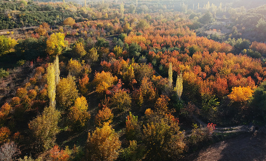 The Nature Conservancy「Nature in Autumn」:スマホ壁紙(10)