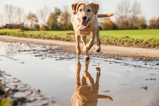 Puddle「Happy dog running through puddle, autumn」:スマホ壁紙(15)