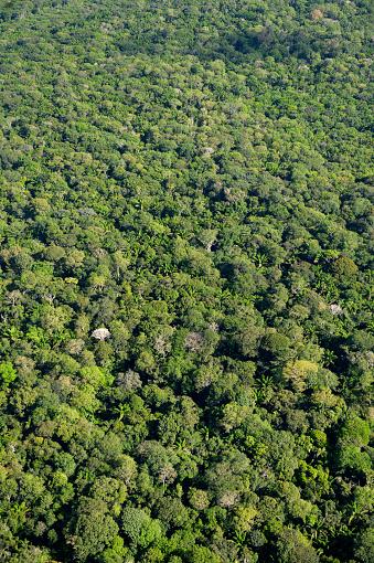 Amazon Rainforest「Brazil, Para, Amazon rainforest, aerial view」:スマホ壁紙(3)