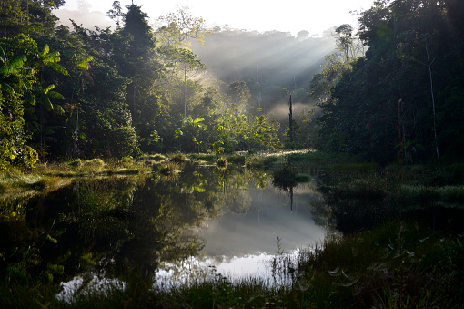 Amazon Rainforest「Brazil, Para, Amazon rainforest, pond in the morning」:スマホ壁紙(6)