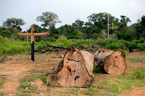 アマゾン熱帯雨林「Brazil, Para, Trairao, illegally lumbered trees of Amazon rainforest」:スマホ壁紙(7)
