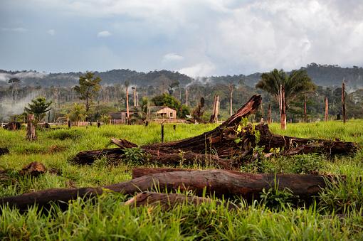 Amazon Rainforest「Brazil, Para, Itaituba, Amazon rainforest, slash and burn, reclamation of pastureland」:スマホ壁紙(11)