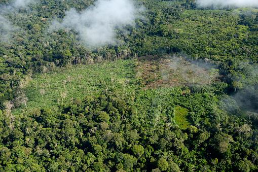 Amazon Rainforest「Brazil, Para, Itaituba, Amazon rainforest, slash and burn, reclamation of pastureland」:スマホ壁紙(14)