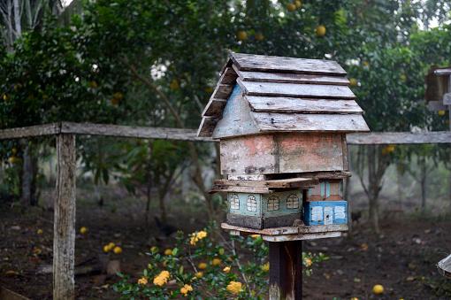 アマゾン熱帯雨林「Brazil, Para, Trairao, Amazon rainforest, Agrarian Reform Areia, apiary」:スマホ壁紙(10)