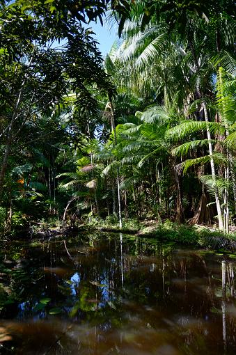 アマゾン熱帯雨林「Brazil, Para, Trairao, Amazon rainforest, pond」:スマホ壁紙(11)