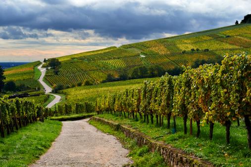Dirt Road「Alsace Wine Route, France」:スマホ壁紙(12)