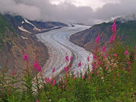 Salmon River  Alaska「Fireweed and the Salmon Glacier」:スマホ壁紙(16)