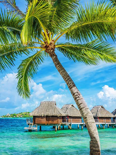 Bora-Bora Luxury Resort under Palm Trees:スマホ壁紙(壁紙.com)