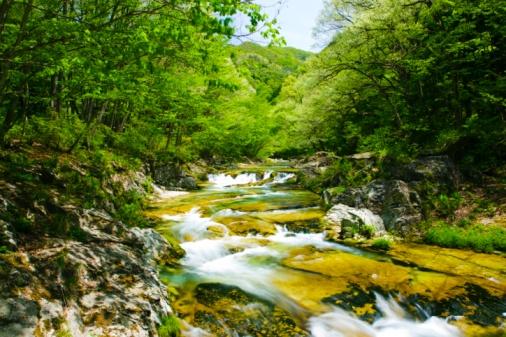 Nikko City「Flowing river surrounded by forest. Nikko, Tochigi Prefecture, Japan」:スマホ壁紙(10)