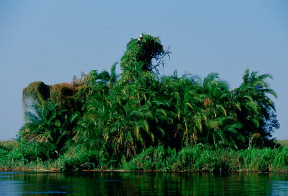 Grass Family「African Fish Eagles」:写真・画像(17)[壁紙.com]