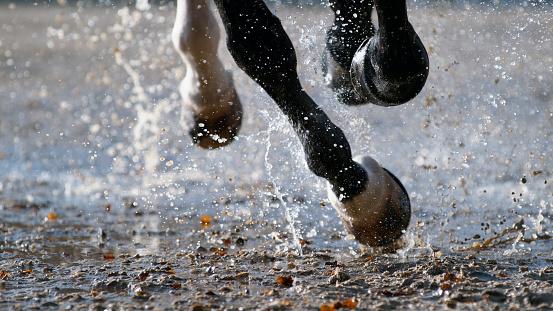 セレクティブフォーカス「濡れた地面を打って馬のひづめの音」:スマホ壁紙(10)