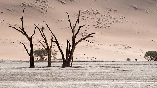 Namibian Desert「Deadvlei, Sossusvlei. Namibia」:スマホ壁紙(13)
