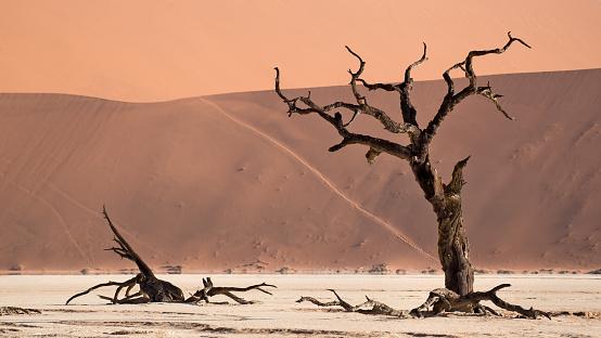 Namibian Desert「Deadvlei, Sossusvlei. Namibia」:スマホ壁紙(12)