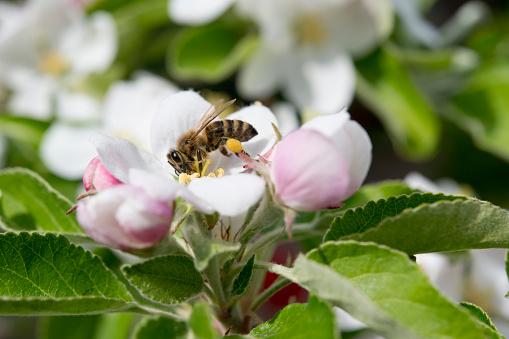 Apple Blossom「animal」:スマホ壁紙(13)