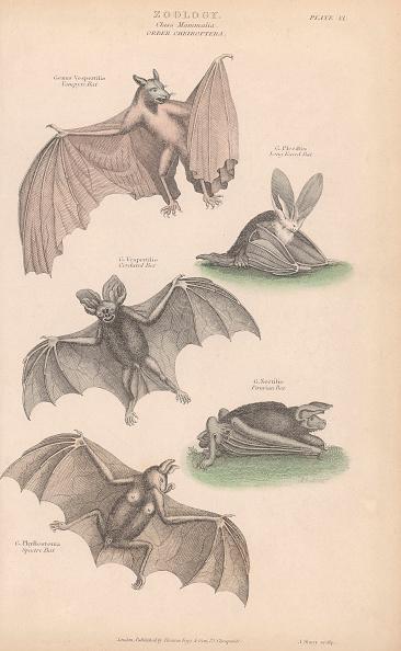 animal「Bats」:写真・画像(18)[壁紙.com]