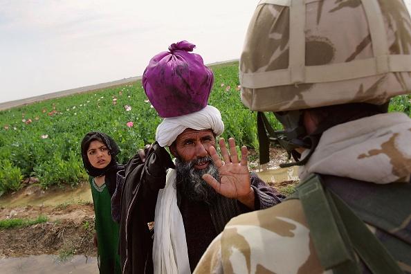 Oriental Poppy「British Troops Secure Helmand Province In Southern Afghanistan」:写真・画像(6)[壁紙.com]