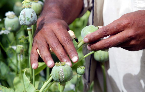 Taliban「Poppy Fields in the Tora Bora Region of Afghanistan」:写真・画像(2)[壁紙.com]