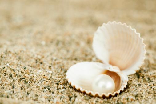 貝殻「シェルのパール」:スマホ壁紙(2)