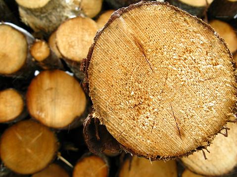 Woodpile「Log protruding from pile」:スマホ壁紙(13)