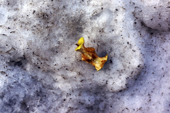 Temptation「As Heavy Snows Recede, Trash Artifacts Appear On NYC Streets」:写真・画像(8)[壁紙.com]
