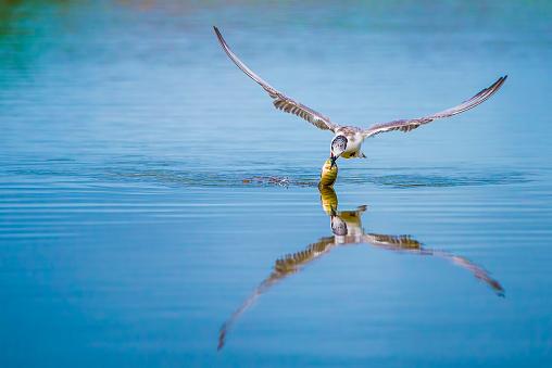 Animals Hunting「Bird catching a fish, Gorontalo, Indonesia」:スマホ壁紙(13)