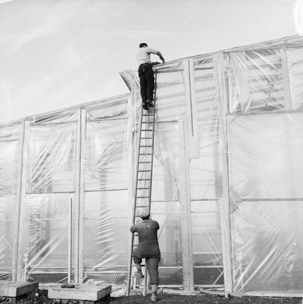 Transparent「Plastic Greenhouse」:写真・画像(14)[壁紙.com]