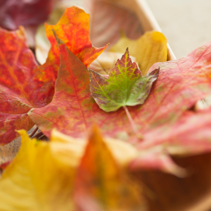紅葉「Colorful autumn leaves」:スマホ壁紙(10)