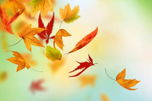 かえでの葉「カラフルな秋」:スマホ壁紙(5)