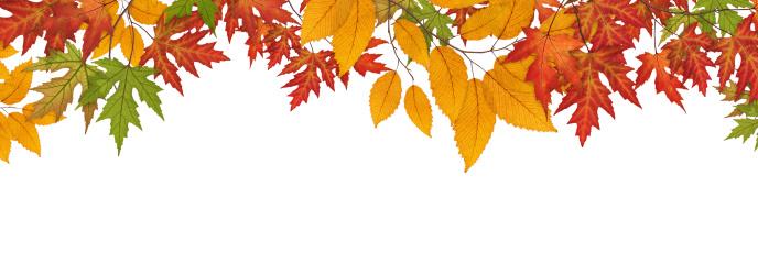 Maple Leaf「Colorful Autumn Leaves On White Background」:スマホ壁紙(9)