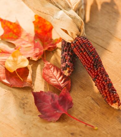 紅葉「Colorful autumn leaves and corncob」:スマホ壁紙(9)