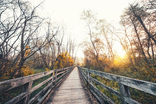 Celje「Colorful Autumn Path」:スマホ壁紙(16)