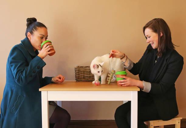 First Australian Cat Cafe Opens In Melbourne:ニュース(壁紙.com)