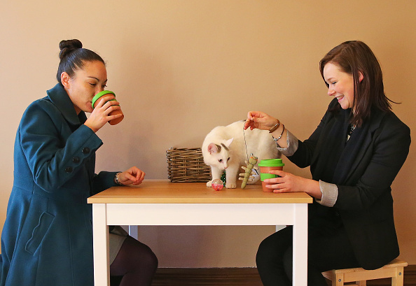 Coffee - Drink「First Australian Cat Cafe Opens In Melbourne」:写真・画像(14)[壁紙.com]