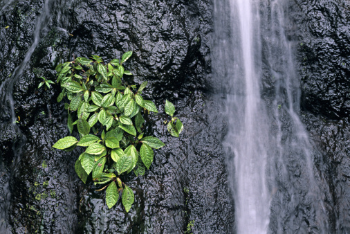 Bolivian Andes「Small waterfall in cloud forest, Andes Mountains, Ecuador」:スマホ壁紙(1)