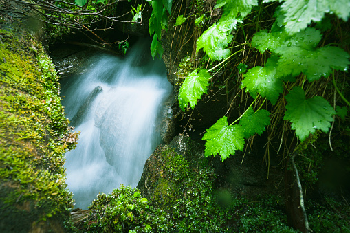 Joffre Lakes Provincial Park「A small waterfall appears and disappears again on a mossy slope」:スマホ壁紙(4)