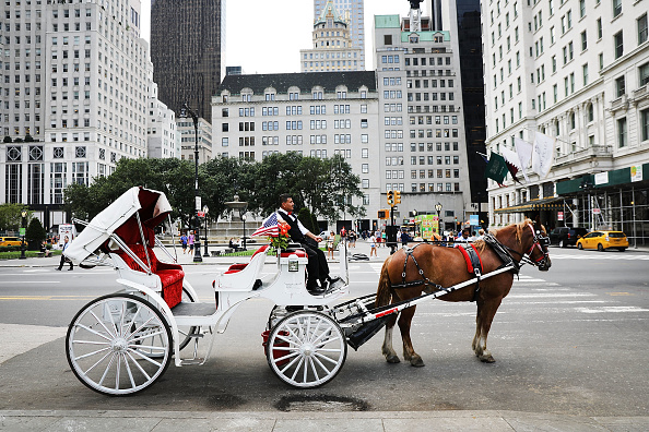 Horse「Continuing Heat Wave Impacts New York City's Carriage Horse Industry」:写真・画像(14)[壁紙.com]