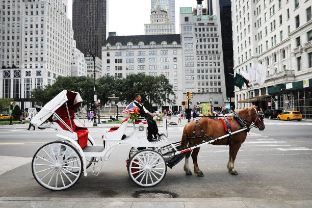 Continuing Heat Wave Impacts New York City's Carriage Horse Industry:ニュース(壁紙.com)