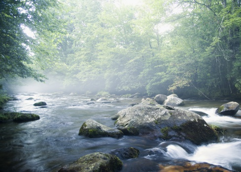 River「Creek in Smokey Mountain National Park」:スマホ壁紙(16)