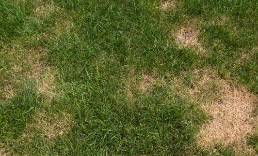 Dead「Lawn problems」:スマホ壁紙(19)