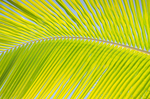 Frond「Close-up view of palm leaf」:スマホ壁紙(10)
