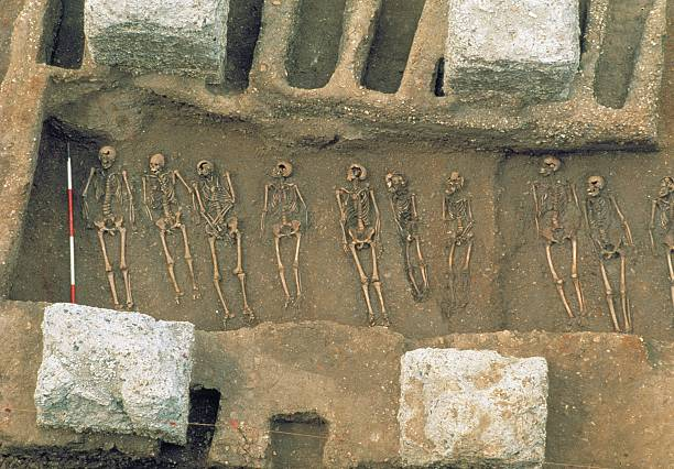 The Excavation Of The Black Death Cemetery At The Royal Mint Site:ニュース(壁紙.com)